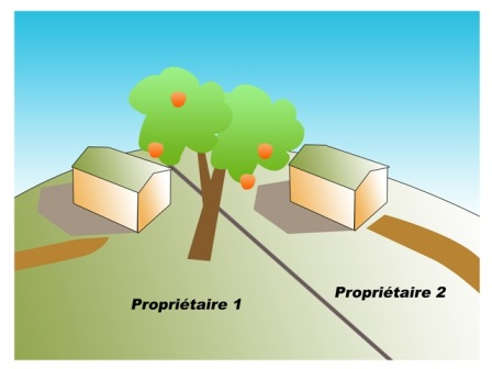 abattage arbre prescription trentenaire